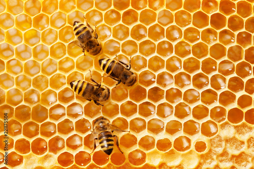 Photo sur Toile Bee Bees on honeycomb.