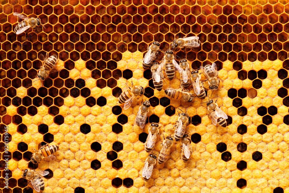 Fotografie, Obraz Bees on honeycomb.