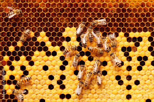 Tuinposter Bee Bees on honeycomb.
