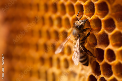 Tuinposter Bee Bee on honeycomb.