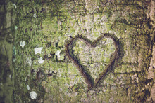 Heart Shape Carved Into The Bark