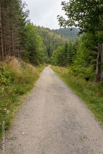Keuken foto achterwand Weg in bos Chemin forestier