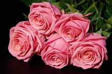 Five Pink Roses On Black Backg...