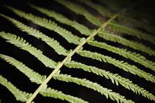 Fern Leaf Branch Abstract Clos...