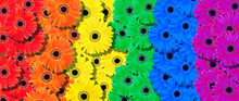 Colors Of Rainbow. Pattern Of Multicolored Flowers  Texture Background. Palette Of Colors Of A Rainbow.