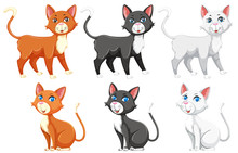 A Set Of Different Cat