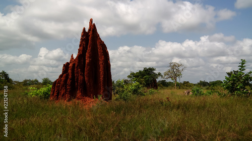 Photo Savannah landscape with the termite mound, Ghana