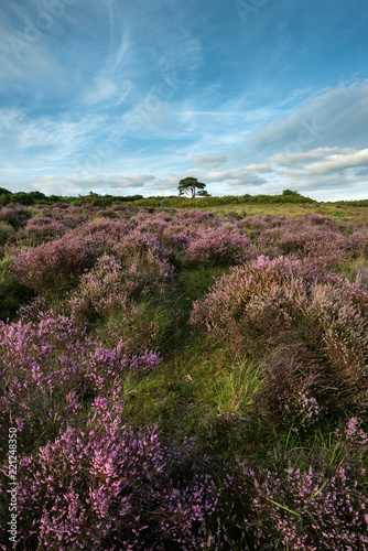 Spoed Foto op Canvas Cappuccino Stunning Summer sunset landscape image of Bratley View in New Forest National Park England