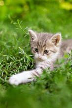 Portrait Of A Kitten In Green Grass