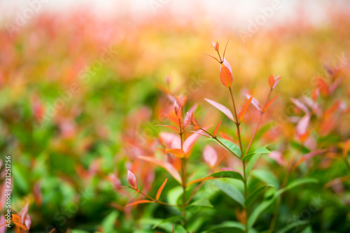 Spoed Foto op Canvas Natuur Closeup nature view of red leaf on blurred background in garden