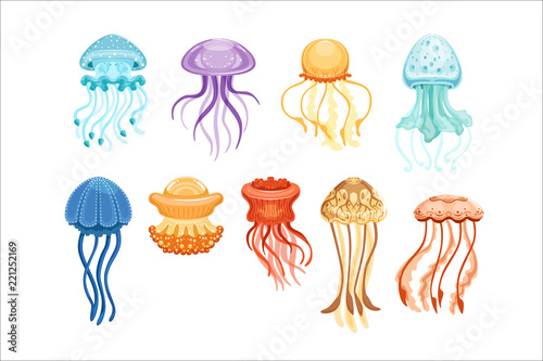 Cuadros en Lienzo Colorful jellyfish set, swimming marine creatures watercolor vector Illustration