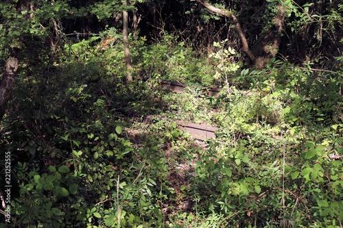 Foto op Canvas Spoorlijn Voie ferrée desaffectée Train abandonné