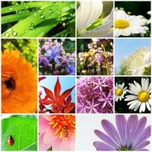 Garten Pflanzen Raster Collage