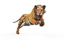 Dangerous Bengal Tiger Roaring...