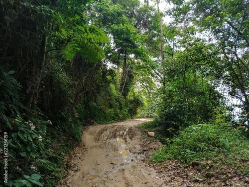 Tuinposter Weg in bos Minca