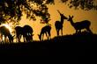 Deers (cervus elaphus) group backlighted, warm sunset, tree