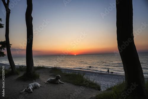 Staande foto Strand Dogs resting on sunset beach, Wiendorf, Mecklenburg-Vorpommern, Germany