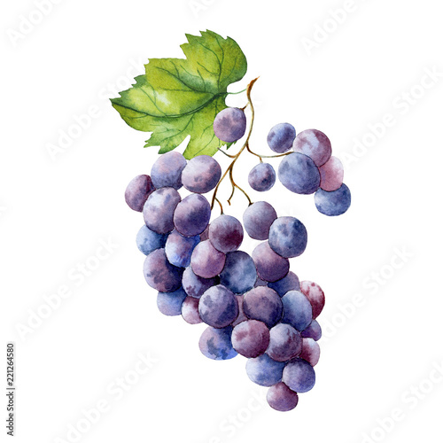 Valokuva watercolor fruit branch grape