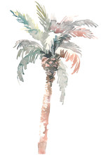 Watercolor Palm, Hand Drawn Illustration For Your Design. Isolated On White Background