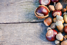 Chestnuts And Acorns On Wooden...