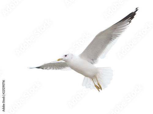 Seagull inhabiting the coast of the Caspian Sea Fototapeta