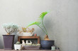 Cactus are in the gray, white and brown pot with wood frame and cat statue on wooden background