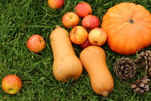 Autumn Fruits On The Lawn. Pumpkins, Apples, Pine Cones.