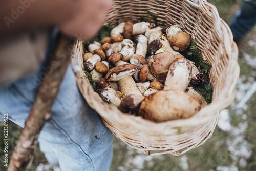 Obraz na płótnie mushroom picking