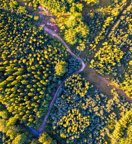 Aerial landscape with forest in sunset light