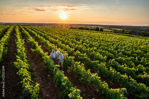 Canvas Print Top view. Winegrowers using a tablet, in their vines at sunset.