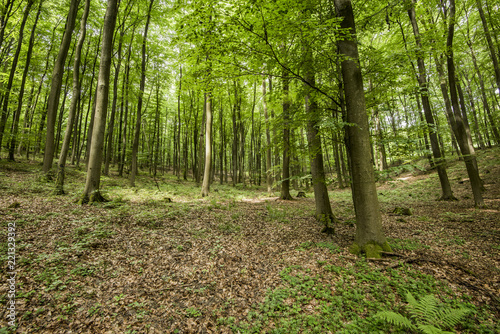 Photo Stands Road in forest Forest landscape. Green forest and fern, Germany