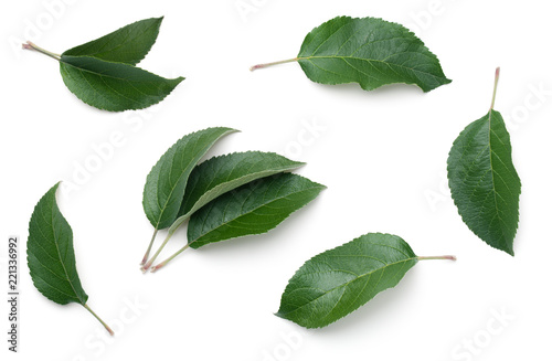 Apple Leaves Isolated on White Background