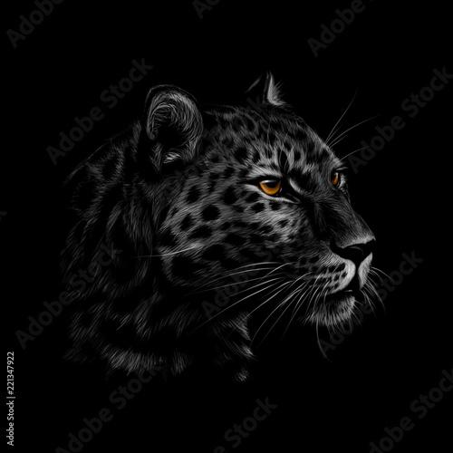 Staande foto Afrika Portrait of a leopard head on a black background.