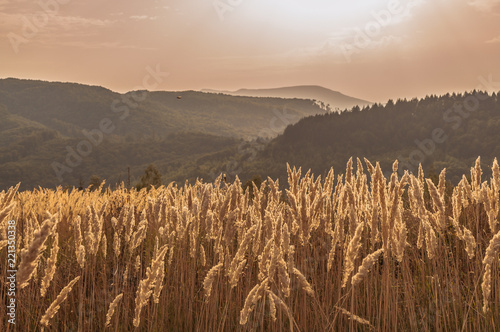 Deurstickers Zalm Landscapes of Autumn Carpathian Mountains