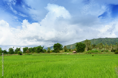 Tuinposter Platteland Rice field. Laos. The Province Of Xiangkhoang.