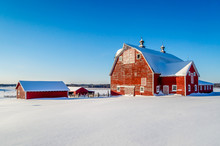 Minnesota Small Farm Perched O...