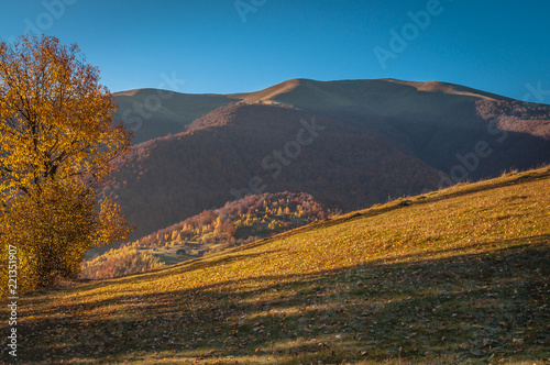 Poster Grijze traf. Landscapes of Autumn Carpathian Mountains