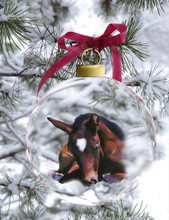 Newborn Foal In Holiday Ornament