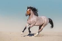 Roan Horse Free Run Fast In Sa...
