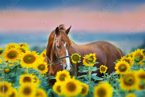 Foto op Canvas Paarden Red stallion in bridle portrait in sunflowers