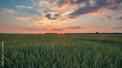 Papiers peints Morning Glory Beautiful sunset sky over ceral field in calm rural landscape