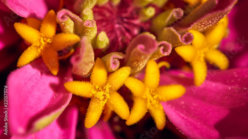Yellow Star Shaped Flower Anther In Macro Shot Buy This Stock