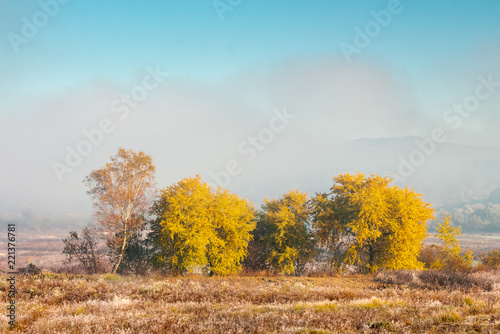 Foto op Canvas Herfst beautiful autumn landscape in the valley. fog above the meadow and yellow trees in sunlight. mountain is seen in the far distance