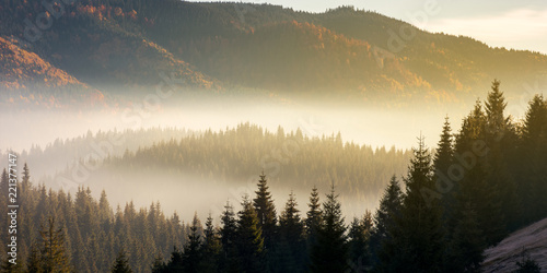 Aluminium Prints Autumn beautiful foggy scenery in autumn at sunrise. fog rise above the distant valley and spruce forest on the hill
