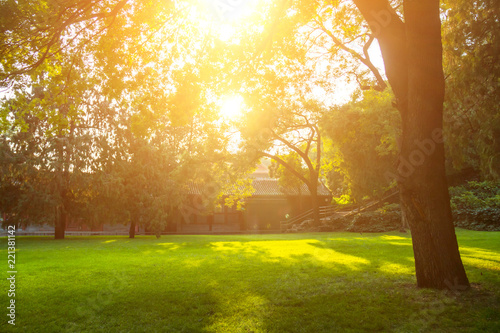 Summer lawn at sunset Canvas Print