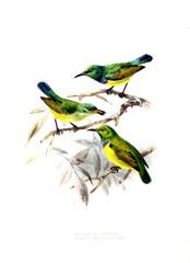 Panel Szklany Botaniczne Illustration of birds.