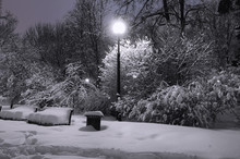 Benches Brought By Snow, Trees In Snow