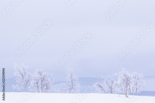 Fotografia, Obraz  Snow and frost covered trees in a white landscape in Norway