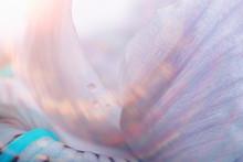 Macro Petals Orchid Background / Summer Floral Background, Flower Petals Texture, Macro Details