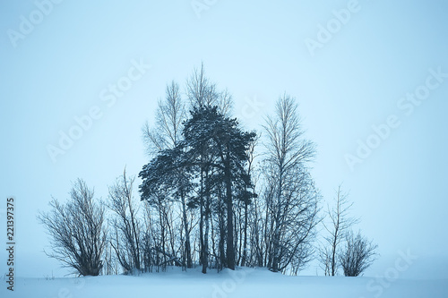Foto op Aluminium Lichtblauw snow fog landscape snowfall / winter landscape cold seasonal weather, nature in winter form, foggy outside